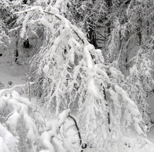 Ośnieżony krzew przypomina ogromną modliszkę