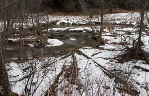 Budując tamy i żeremie, kształtują krajobraz potoków